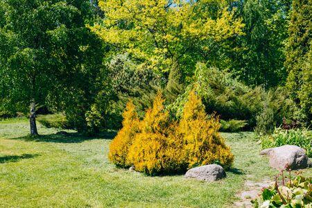 Green Trees And Bushes In Garden. Garden design, landscaping Stock Photo