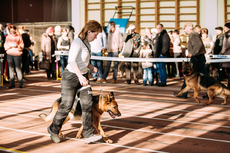 important event: Gomel, Belarus - February 7, 2016: Woman and Alsatian Wolf Dog dog visit International dog show, important event dedicated to dogs and their owners.