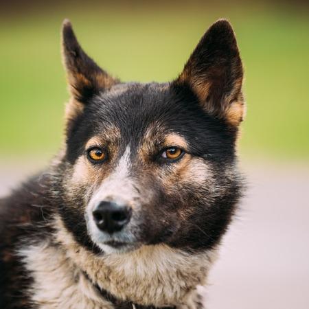medium size: Close Up Portrait Of Medium Size Mixed Breed Dog