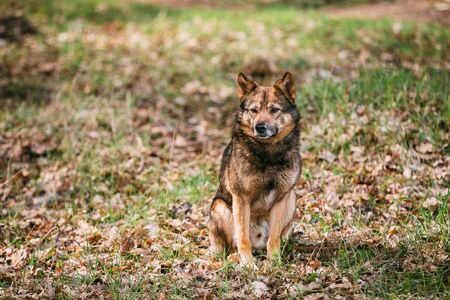 medium size: Medium Size Mixed Breed Homeless Dog Sit In Yellow Autumn Foliage Outdoor