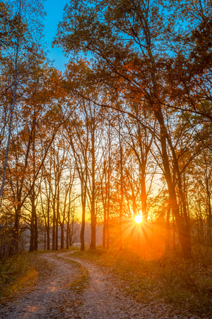 road and path through: Winding Countryside Road Path Walkway Through Autumn Forest. Sunset Sunrise. Nobody. Road Turns To Rising Sun.