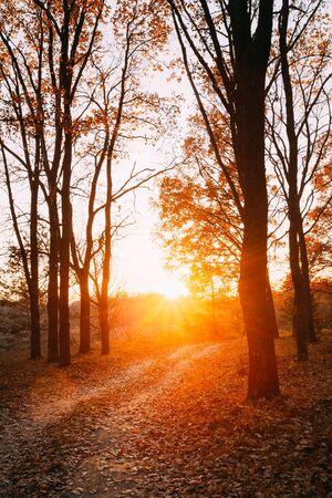 sol naciente: Camino del enrollamiento Camino Del Campo Calzada a través del bosque de otoño. Atardecer Amanecer. Nadie. Carretera se convierte en Rising Sun. Foto de archivo