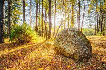 ice age: Sunset Sunrise Over Ancient Stones, Boulders From The Ice Age In Beautiful Wild Autumn Forest. The Berezinsky Biosphere Reserve Stock Photo