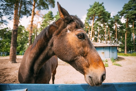 ''wide angle'': Funny Brown Horse Photographed A Wide Angle Lens