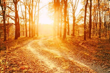 sol naciente: Winding Countryside Road Path Walkway Through Autumn Forest. Sunset Sunrise. Nobody. Road Turns To Rising Sun.