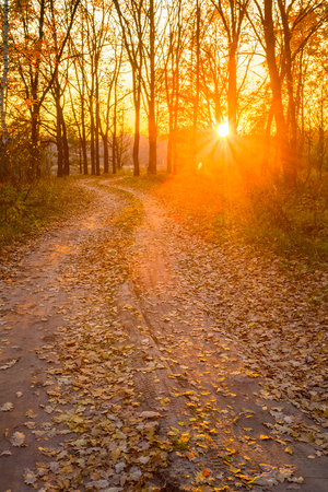 road and path through: Winding Countryside Road Path Walkway Through Autumn Forest. Sunset Sunrise. Nobody. Road Turns To Rising Sun