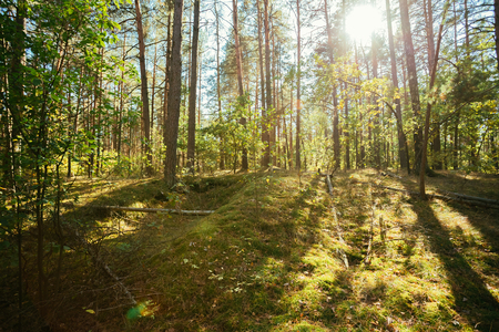 trenches: Old World War Trenches In Forest Since Second World War In Belarus