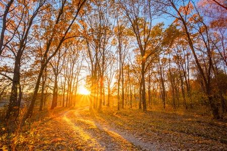 the rising sun: Camino del enrollamiento Camino Del Campo Calzada a través del bosque de otoño. Atardecer Amanecer. Nadie. Carretera se convierte en Rising Sun. Foto de archivo