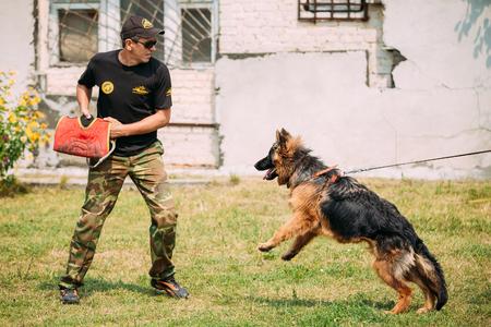kampfhund: Gomel, Weißrussland - 23. Juli 2016: Deutscher Schäferhund Ausbildung in Gomel Regional Sportverein und dekorative Hundezucht. Biting Hund. Elsässer Wolf-Hund. Deutscher, Hund