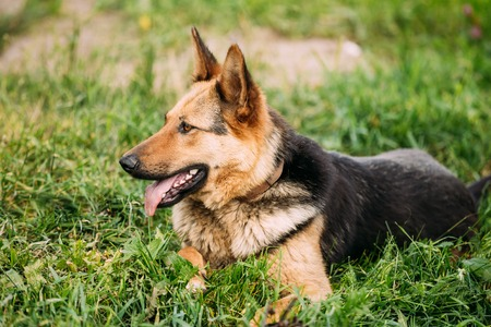 medium size: Medium Size Mixed Breed Dog Sit In Green Grass Outdoor