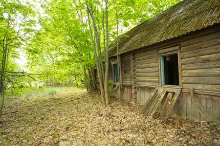 exclusion: The Dilapidated Old Abandoned Wooden Country Blockhouse, Overgrown By Maple Trees In Exclusion Area After Chernobyl Tragedy And Nuclear Contamination In Summer.