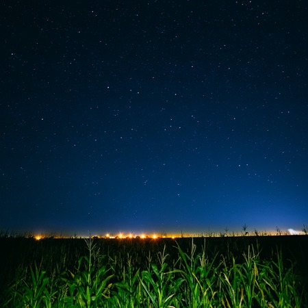 Blue Night Starry Sky Above Green Cornfield And Yellow City Lights