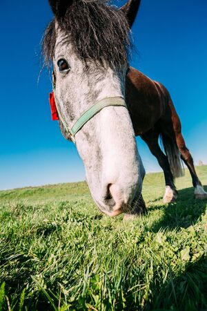 wide angle lens: Close Up Of Funny Portrait On Wide Angle Lens Of Horse On Blue Sky Background