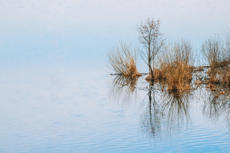 Spring Nature. Trees Woods Standing In Water During A Spring Flood Stock Photo
