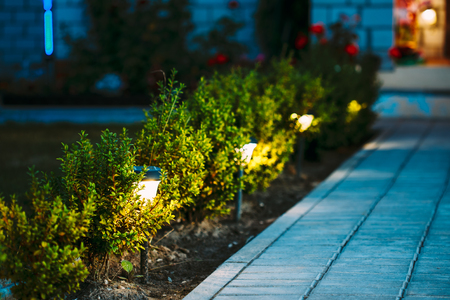 Night View Of Flowerbed With Flowers Illuminated By Energy-Savin Archivio Fotografico