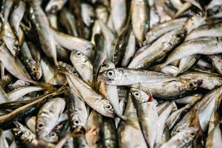 engraulis: Fresh Fish On Display On Ice On Fishermen Market Store Shop. Seafood