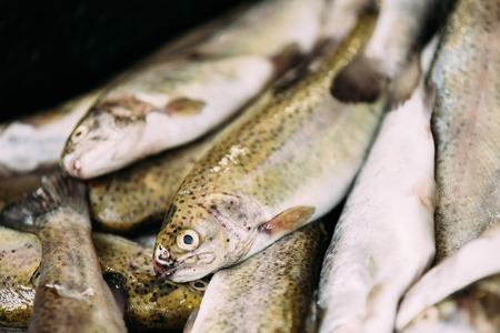 Fresh Fish On Display On Ice On Market Store Shop. Seafood Fish