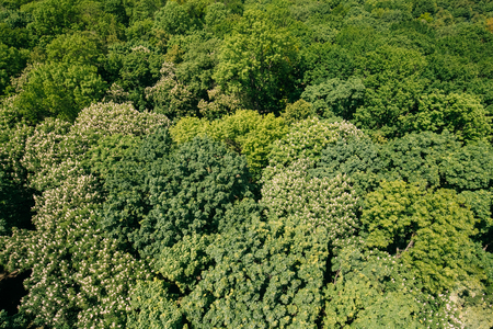 cultivate: Green Background Of Deciduous Forest. Top View Aerial View Landscape