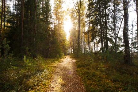 Sun shining over road, path, walkway through forest. Sunset Sunrise