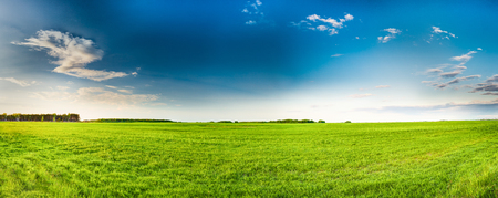 Rural Field Or Meadow Landscape With Green Grass Under Scenic Sping