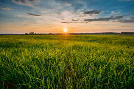 Spring Sun Shining Over Agricultural Landscape Of Green Wheat Field 版權商用圖片 - 94757051