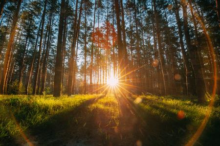 Bellissimo tramonto alba sole sole nella soleggiata estate conifere