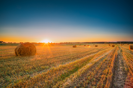 Rural Landscape Field Meadow With Hay Bales During Harvest In Su