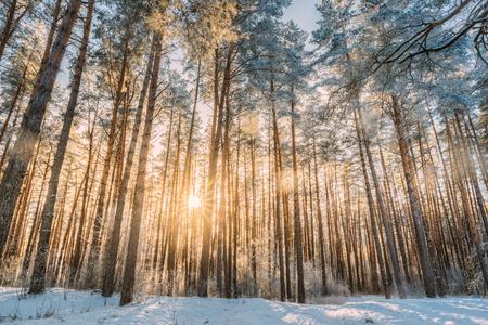 Schöner Sonnenuntergang Sonnenaufgang Sonne Sonnenschein im sonnigen Winter verschneiten Coni