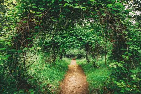 Beautiful Alley In Park. Garden Landscaping Design Banco de Imagens