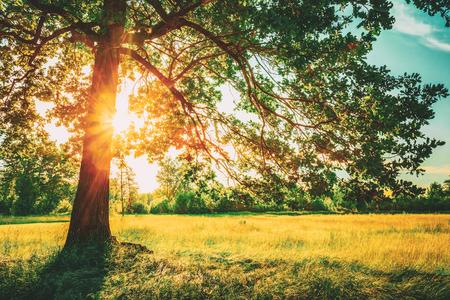 Zomer zonnige bos bomen en groen gras. Natuur hout zonlicht achtergrond. Instant getinte afbeelding Stockfoto
