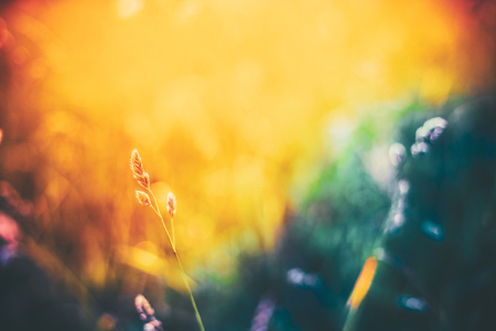 Summer Grass Meadow Close-Up With Bright Sunlight. Sunny Spring Background. Banco de Imagens