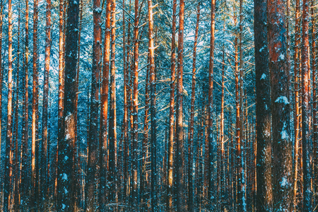 Winter forest nature snow woods background Banco de Imagens