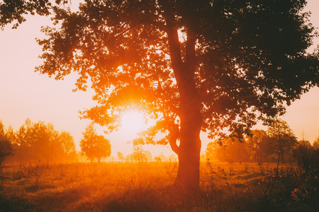 Sunset Or Sunrise In Misty Forest Landscape. Sun Sunshine With Natural Sunlight Through Oak Wood Tree In Morning Forest. Beautiful Scenic View. Autumn Nature Of Belarus