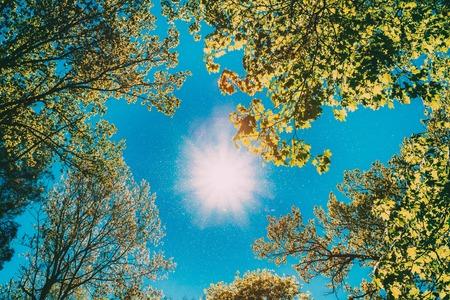 Baldacchino soleggiato di alberi ad alto fusto. Luce solare nella foresta decidua, natura estiva. Rami superiori dell'albero. Inquadratura dal basso.