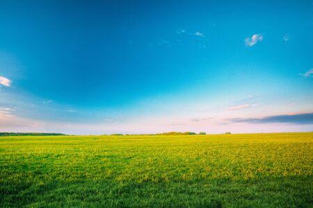 Agricultural Landscape. Countryside Rural Field Landscape Under Scenic Spring Blue Clear Sunny Sky. Skyline. Standard-Bild