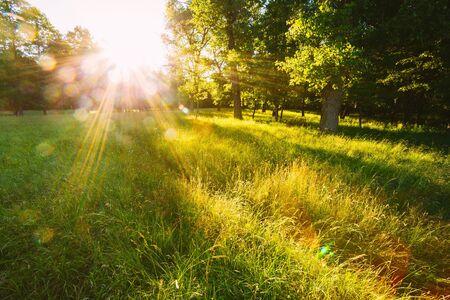 Coucher De Soleil Ou Lever Du Soleil Dans Le Paysage De La Forêt. Soleil du soleil avec la lumière naturelle du soleil et les rayons du soleil à travers les arbres en forêt d'été. Belle vue panoramique. Effet de lumière parasite naturel réel