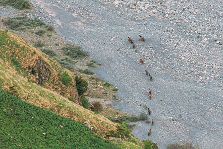 Herd Of Horses Going To The Mountain River Terek In Darial Gorge, Kazbegi District, Mtskheta-Mtianeti Region, Georgia. Top View. Aerial View Stockfoto