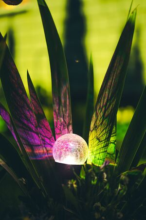 Night View Of Flowerbed Illuminated By Energy-Saving Solar Powered Colorful Multi-colored Lantern On Yard. Beautiful Small Garden With Purple And Yellow Lights, Lamp In Flower Bed. Garden Design.
