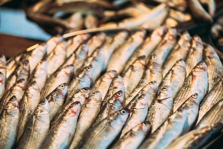 Fresh Sprat Fish On Display On Ice On Market Store Shop. Seafood Fish Background. Фото со стока