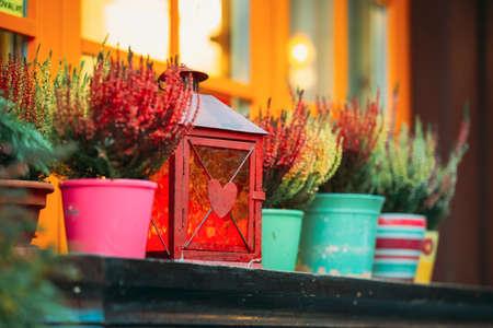 Bush Of Colorful Calluna Plants In Pots Under Window In Garden