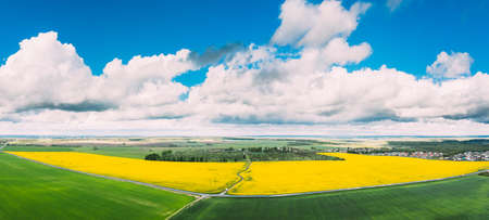 Aerial View Of Agricultural Landscape With Flowering Blooming Rapeseed, Oilseed In Field Meadow In Spring Season. Blossom Of Canola Yellow Flowers. Beautiful Rural Landscape In Bird's-eye View. Panorama.