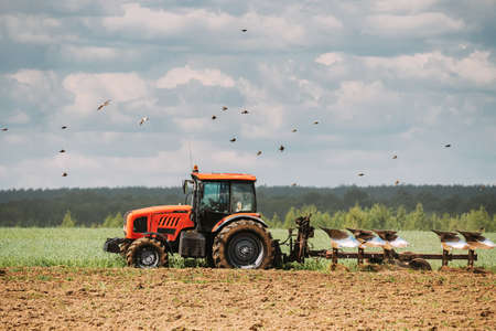 Flock Of Birds Of Seagull Flies Behind Tractor Plowing Field In Spring Season. Beginning Of Agricultural Spring Season. Cultivator Pulled By A Tractor In Countryside Rural Field