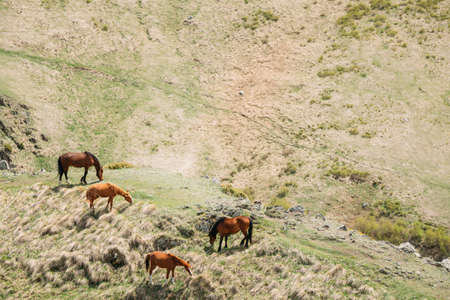 Horses Grazing On Green Mountain Slope In Spring In Mountains Of Georgia