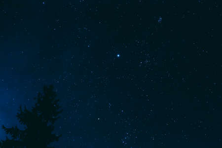 Crown Of Pine Tree On Blue Night Starry Sky Background. Night View Of Natural Glowing Stars