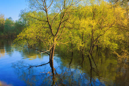 Tree Standing In Water During Spring Flood