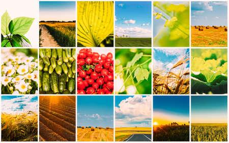 Harvest Concepts. Cereal Collage 版權商用圖片