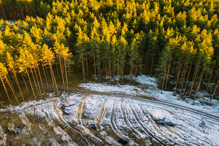 Aerial View Of Coniferous Trees Green Forest In Landscape At Early Spring. Pine Forest In Deforestation Area Landscape. Drone View. Birds Eye View