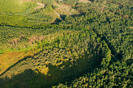 Aerial View Of Evergreen Green Coniferous Forest Landscape. Top View From High Attitude In Summer Evening. Drone View. Birds Eye View. Europe