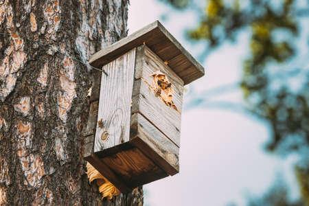 European Hornets Have Occupied Whole Birdhouse With Their Nest 版權商用圖片