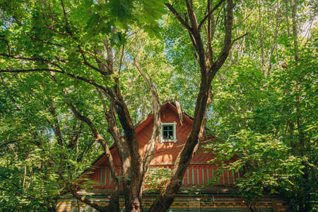 Belarus. Abandoned House Overgrown With Trees And Vegetation In Chernobyl Resettlement Zone. Chornobyl Catastrophe Disasters. Dilapidated House In Belarusian Village. Whole Villages Must Be Disposed